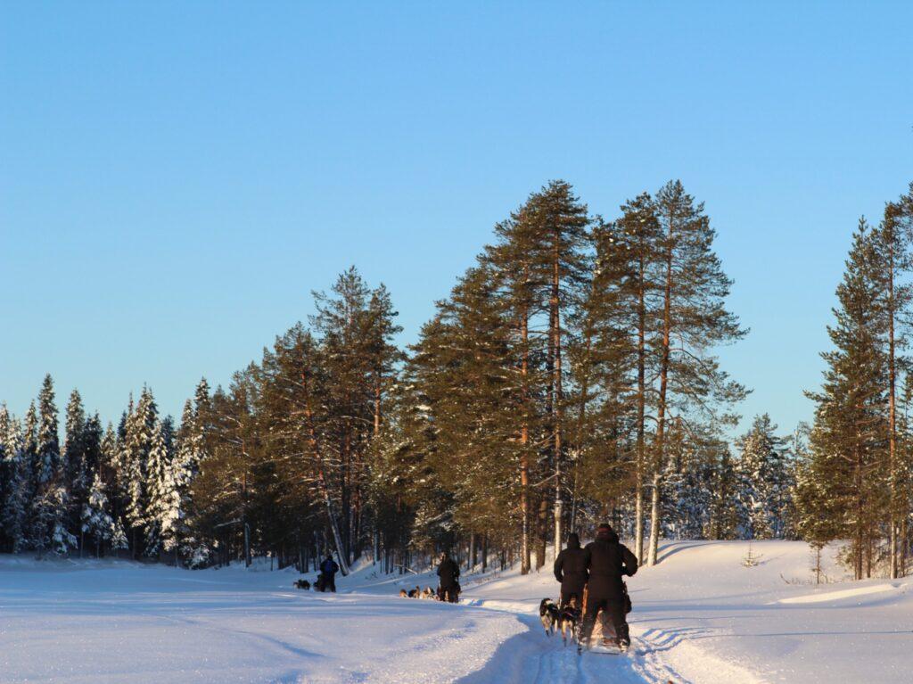 Groepsreis Lapland | Neptune Reizen - Reisbureau Izegem